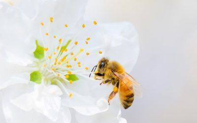 Importancia de las abejas y qué aporta la miel en la alimentación